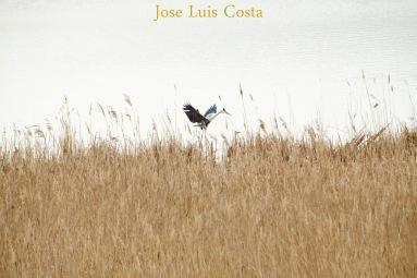 Jose_Luis_Costa0001