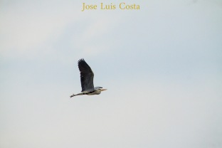 Jose_Luis_Costa0005