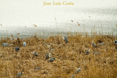 Jose_Luis_Costa0008