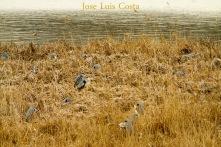 Jose_Luis_Costa0010