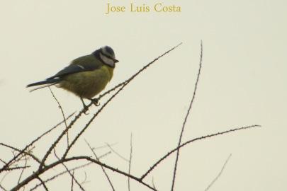 Jose_Luis_Costa0013