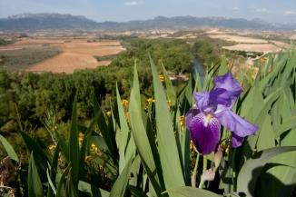 paisaje_viñas