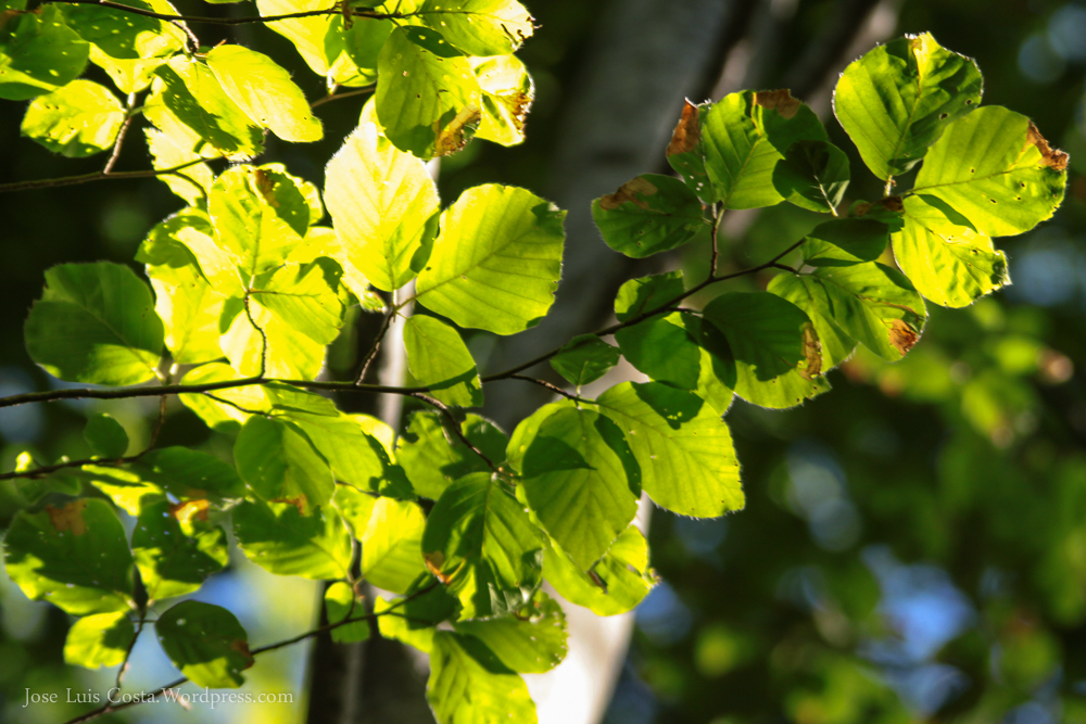 bosques_riojanos-72