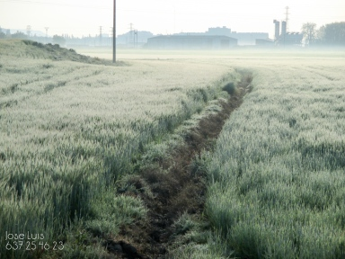 grajera_s_walk-2