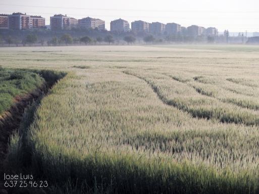 grajera_s_walk-3